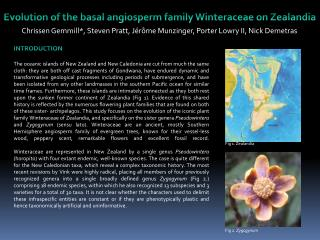 Evolution of the basal angiosperm family  Winteraceae  on  Zealandia
