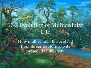 17-3 Evolution of Multicellular Life
