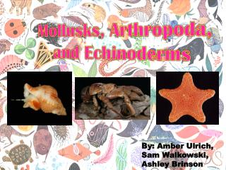 Mollusks, Arthropoda,   and Echinoderms