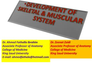 DEVELOPMENT OF SKELETAL & MUSCULAR SYSTEM