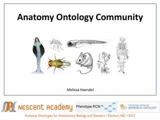 Anatomy Ontology Community