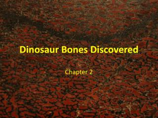 Dinosaur Bones Discovered