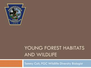 Young forest habitats and wildlife