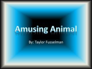 Amusing Animal