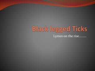 Black legged Ticks