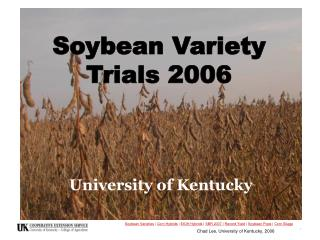 Soybean Variety Trials 2006