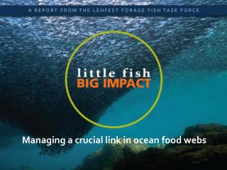 Little Fish,  Big Impact
