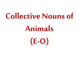 Collective Nouns of Animals (E-O)