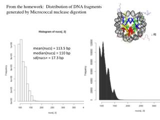 From the homework:  Distribution of DNA fragments generated by  Micrococcal  nuclease digestion