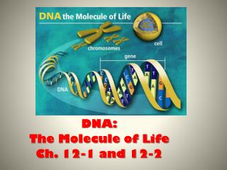 DNA: The Molecule of Life Ch. 12-1 and 12-2