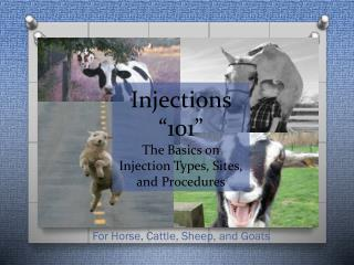 "Injections ""101"" The Basics on Injection Types, Sites, and Procedures"