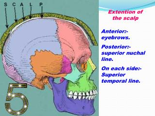 Extention of the scalp