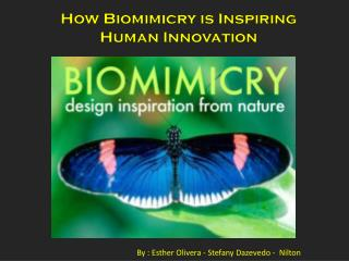 How  Biomimicry  is Inspiring Human Innovation