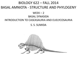 BIOLOGY 622 – FALL 2014 BASAL  AMNIOTA - STRUCTURE  AND PHYLOGENY WEEK –  2 BASAL SYNASIDA