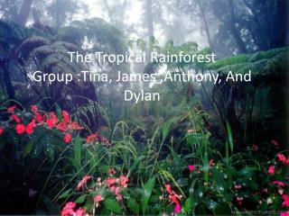 The Tropical Rainforest Group :Tina, James ,Anthony, And Dylan