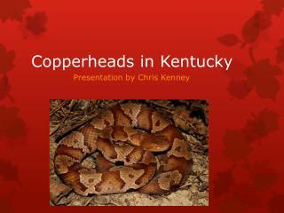 Copperheads in Kentucky