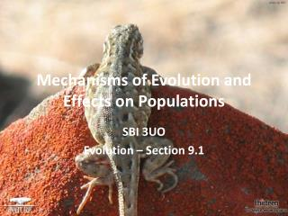Mechanisms of Evolution and Effects on Populations