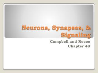 Neurons, Synapses, & Signaling