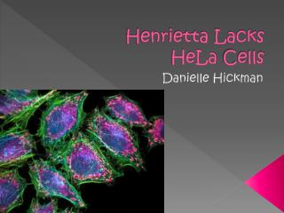 Henrietta Lacks HeLa  Cells