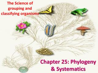 Chapter 25: Phylogeny & Systematics