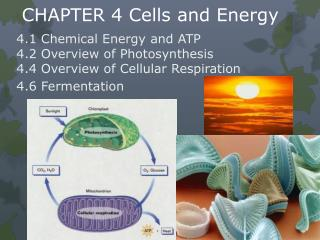 CHAPTER 4 Cells and Energy