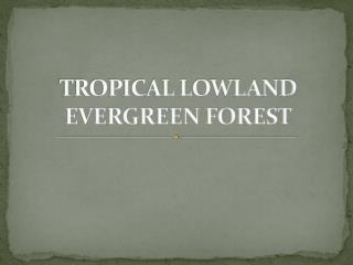 TROPICAL LOWLAND EVERGREEN FOREST