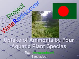 Uptake of Ammonia by Four Aquatic Plant Species