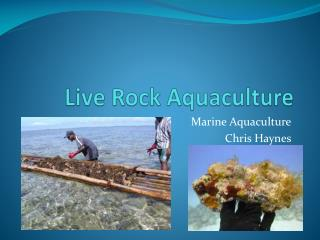 Live Rock Aquaculture