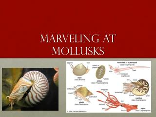 Marveling at Mollusks
