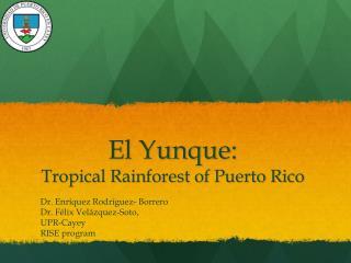 El Yunque : Tropical Rainforest of Puerto Rico