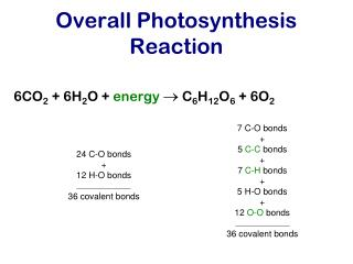 Overall Photosynthesis Reaction