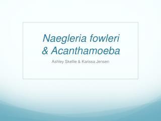 Naegleria fowleri & Acanthamoeba