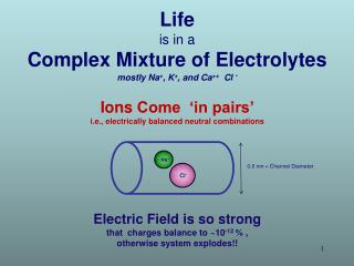 Life  is in a Complex Mixture of Electrolytes mostly Na + , K + , and Ca ++   Cl  -