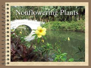 Nonflowering  Plants
