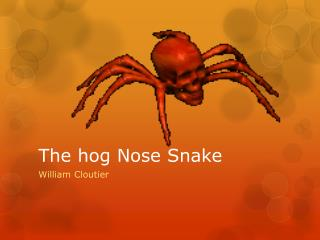 The hog Nose Snake