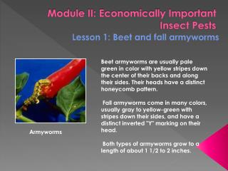 Module II: Economically Important Insect Pests