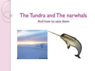 The Tundra and The narwhals