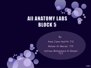 All ANATOMY LABS BLOCK 5