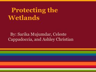 Protecting the Wetlands