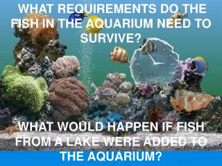 WHAT REQUIREMENTS DO THE FISH IN THE AQUARIUM NEED TO SURVIVE?
