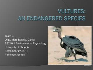 Vultures:  An Endangered  S pecies