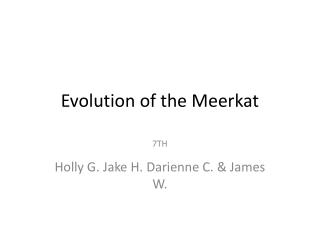 Evolution of the Meerkat