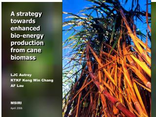 A strategy towards enhanced bio-energy production from cane biomass