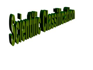 Scientific Classification