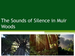 The Sounds of Silence in Muir Woods