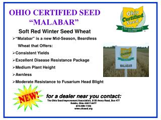 Soft Red Winter Seed Wheat