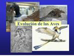 Evoluci n de las Aves