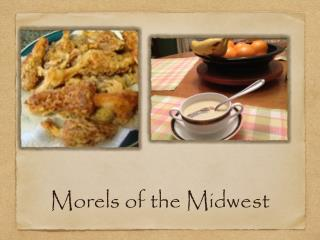 Morels of the Midwest