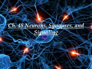 Ch. 48 Neurons, Synapses, and Signaling