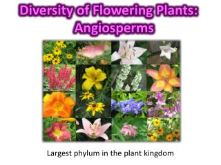 Diversity of Flowering Plants: Angiosperms